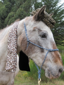 Ziggy is dressed for the cold in vintage leopard print scarf from The Modern Miss (21 Moray Place).