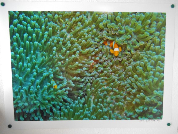 'Clownfish and Anemone' by Anthea Ibell