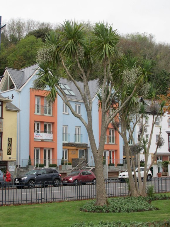 New Zealand Cabbage trees in Mumbles