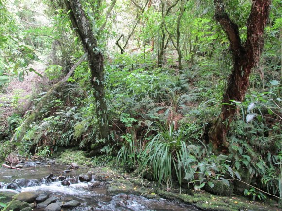 Ross Creek